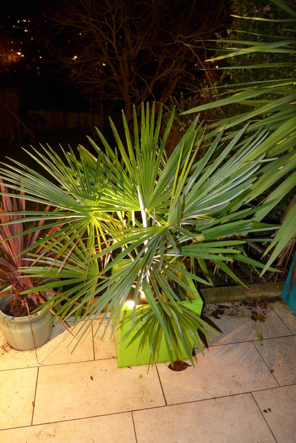 outdoor plant lighting